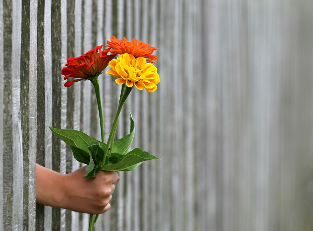 Crossing the divide - a hand with flowers reaches through a fence