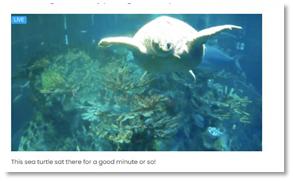 Meghan Cobler's screenshot from the New England Aquarium's livestream